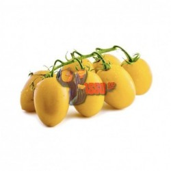 Pomodoro datterino giallo