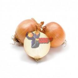 Cipolla Dorata