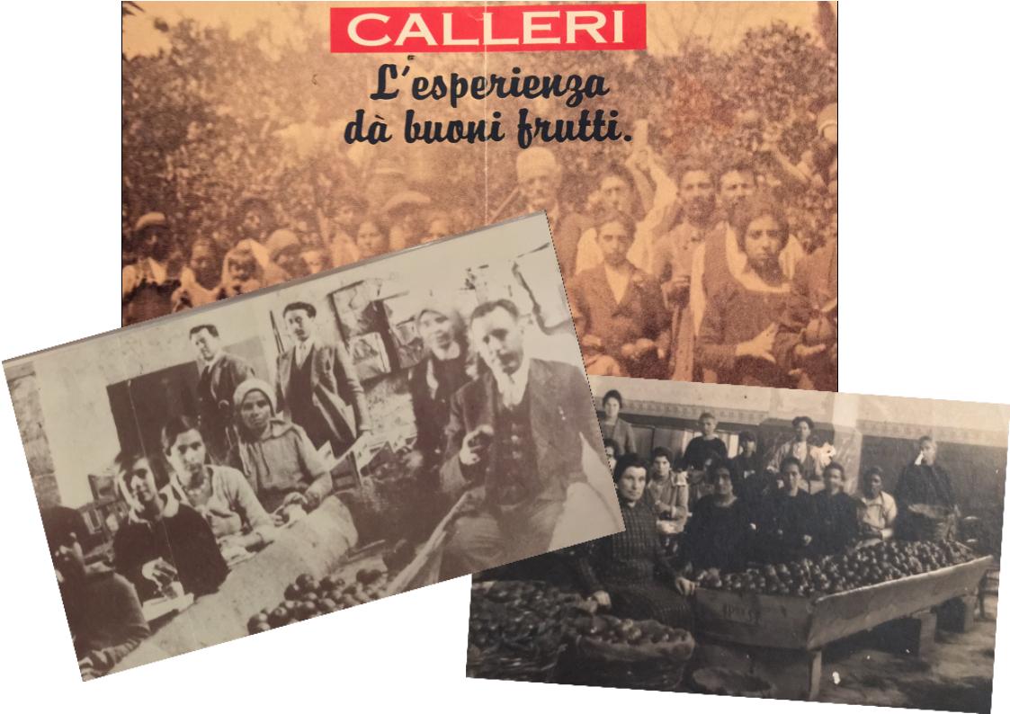 Arance Siciliane  e  Agrumi di Sicilia   Azienda Calleri primi '900